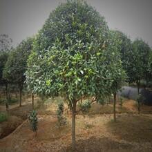 蘇州相城園林綠化養護工程圖片