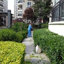 大岭山镇绿化养护服务团队图片