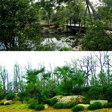 塘厦镇绿化养护服务电话图片
