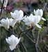 洗發水專用香精白玉蘭香精各種花香果香香精