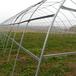 湖北蔬菜大棚生產