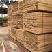麗水建筑木方出售