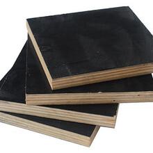 漳州木质建筑模板出租图片