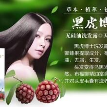 貴陽布福娜黑老虎生產銷售圖片
