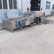 直銷果蔬清洗機生產線,土豆清洗生產線,木瓜清洗生產線圖片