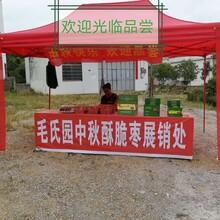 肇庆农产品批发价格图片