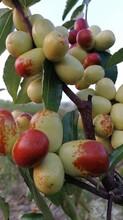 郴州水果种植技术图片