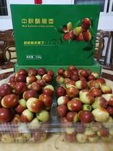 岳陽水果特價批發圖片