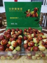 常德有机酥脆枣种苗价格图片