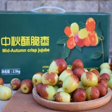 新田縣酥脆棗水果批發價格圖片