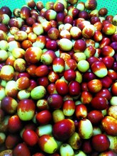 湖南酥脆棗水果采摘園圖片