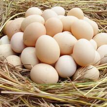 郴州土雞蛋特價批發圖片