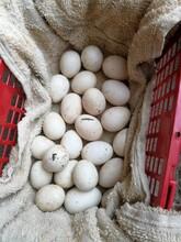 益陽土雞蛋批發圖片