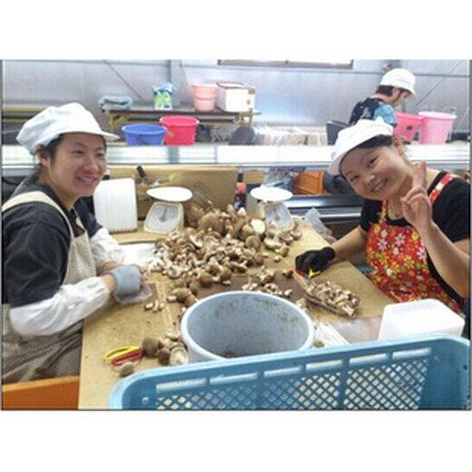 河北懷安縣出國勞務中餐廳招建筑工普工農場廚師年薪30萬起