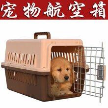 无锡宠物托运服务公司-上门取宠图片