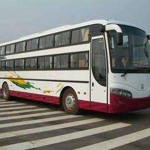 客車)膠州到南陽長途客車上車地址圖片