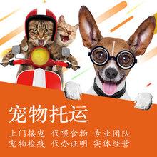 蘇州寵物托運在哪里圖片