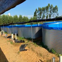 高密度镀锌板养殖池养鱼养虾帆布水池工业农业蓄水池定做批发图片