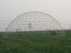 福州鳥巢式球形大棚定做
