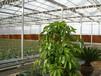 無錫養殖溫室大棚設計