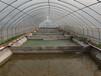 泉州養殖溫室大棚定制
