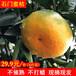 湖南石門蜜桔皮薄多汁新鮮橘子現摘現發招代理一件代發