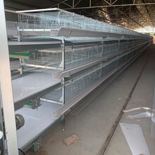 价格低的冷镀锌鸡笼便宜的鸡笼冷镀锌图片