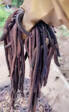 廣地龍蚯蚓養殖,種苗供應,提供技術及回收服務圖片