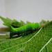 廠家直銷豆蟲養殖網經濟實惠可用5年環保超耐用