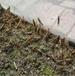 蝗蟲養殖網罩廠家可用3年螞螞蚱養殖紗網