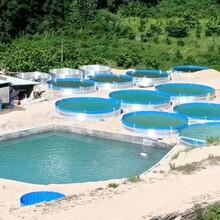 稀有魚養殖池帆布池子工廠化養殖新養蝦水池圖片