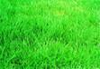 泉州草坪种子芽率测试