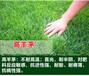 南平草坪种子供应商