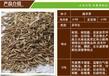 福州草籽销售热线