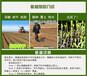 福州草籽厂家