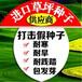 福州四季青草籽供应商