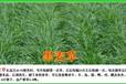 南平草籽供应商