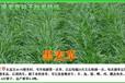 平頂山草坪種子芽率測試