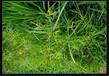 醴陵草坪種子種子正在