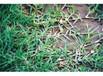 福州草籽种子销售电话