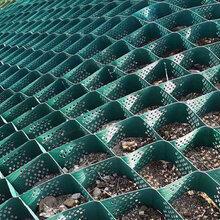 贵阳护岸土工格室护坡土工格室植草山东路易达规格齐全图片