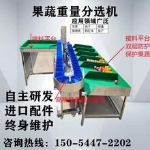 廠家生產重量牡蠣式分選自動機機分級機篩選海參分揀機小龍蝦重量圖片