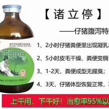 诸立婷——产床小猪拉稀药药图片