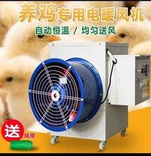 鸡舍猪舍养殖专用电暖风机温室大棚暖风机冬季取暖设备图片
