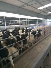 哪里的波尔山羊品种好,哪里的波尔山羊价格低