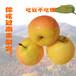東北鞍山南果梨軟梨水果5斤裝禮盒南國梨梨子新鮮產地香水梨