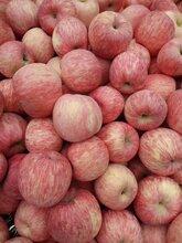 山東紅富士蘋果產地批發直銷今日蘋果批發價格