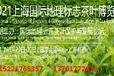 供應2021上海國際茶博會-網站