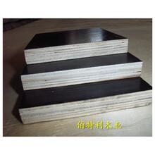 朝陽建筑竹膠板哪里去批發,規格圖片