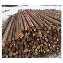 赤峰植树杆木材市场图片